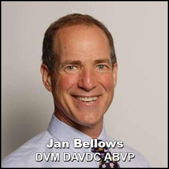 jan bellows